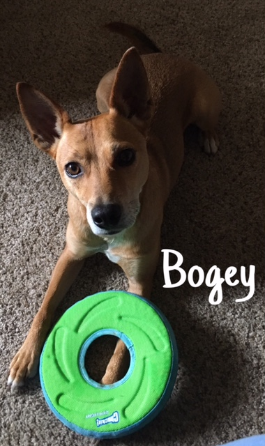 1 Bogey – Copy