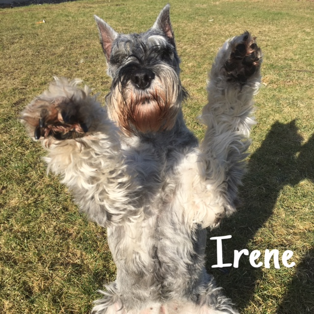 10 Irene – Copy