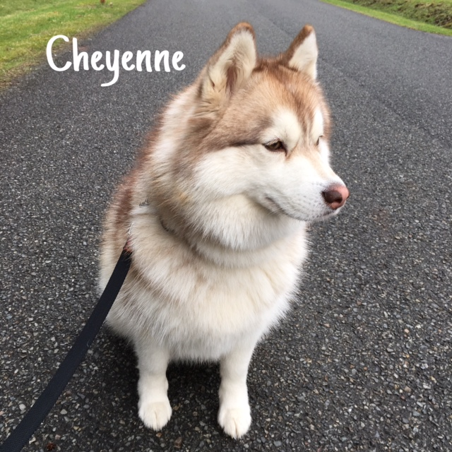 12 Cheyenne – Copy