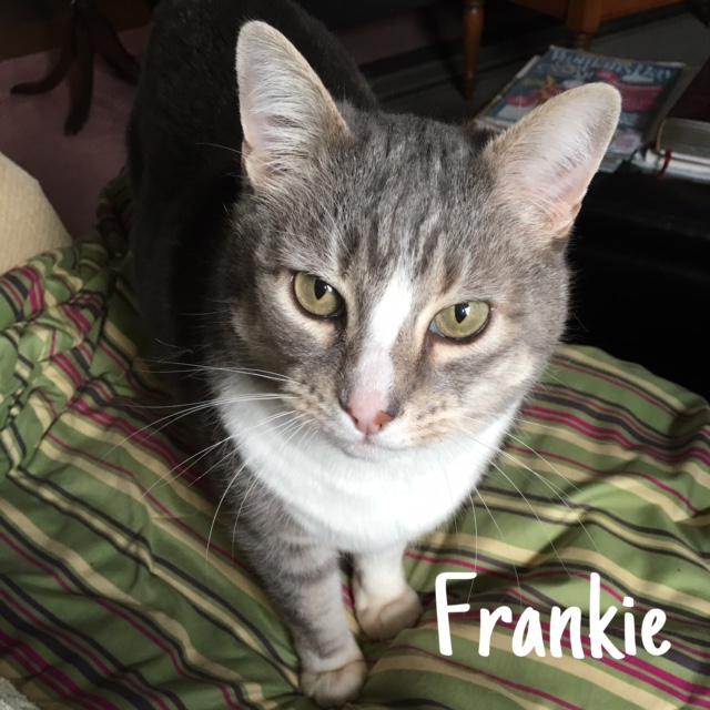 14 Frankie – Copy