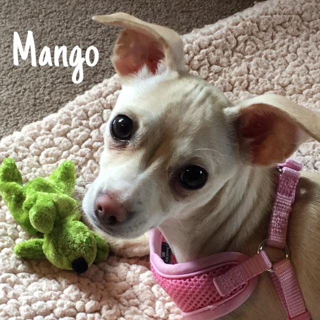 19 Mango – Copy