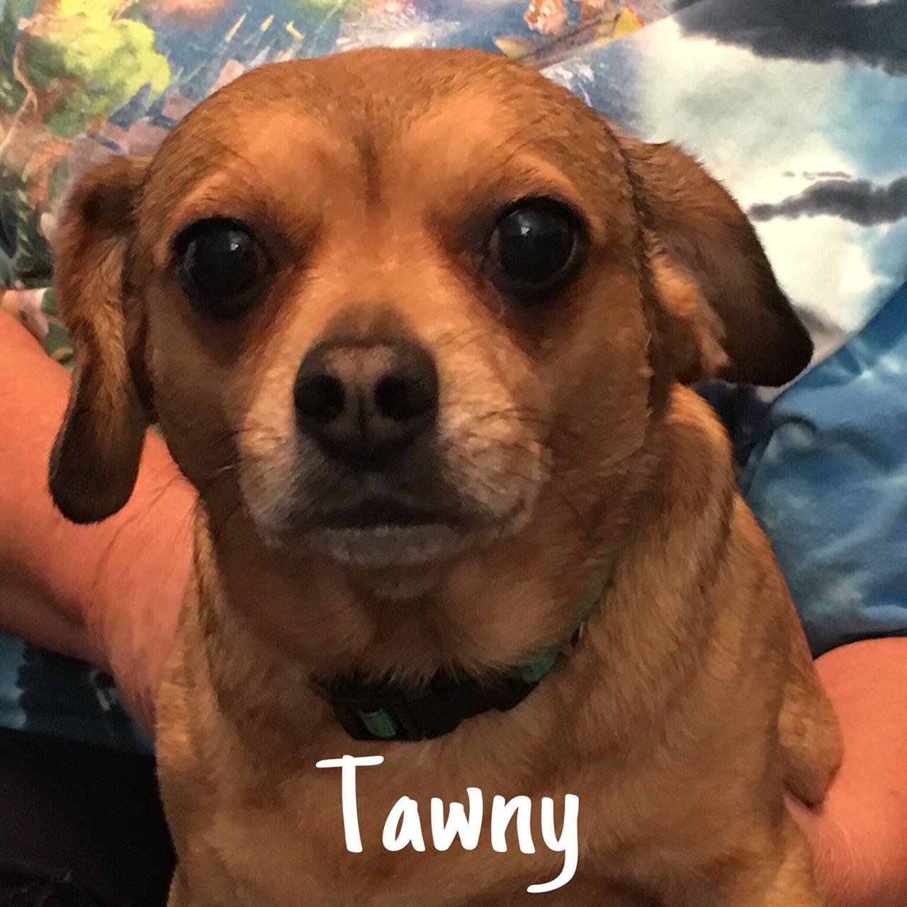 26 Tawny
