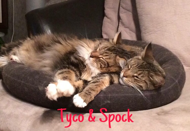4 Tyco & Spock – Copy