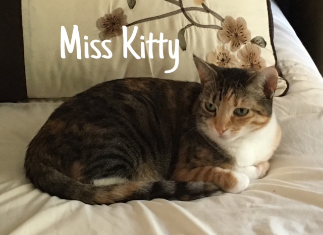 5 Miss Kitty – Copy