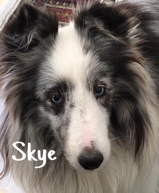6 Skye – Copy