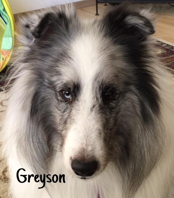 7 Greyson – Copy