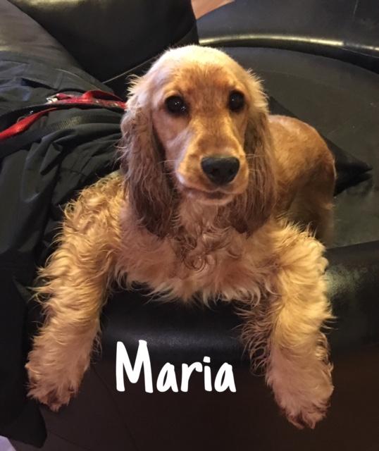 9 Maria – Copy