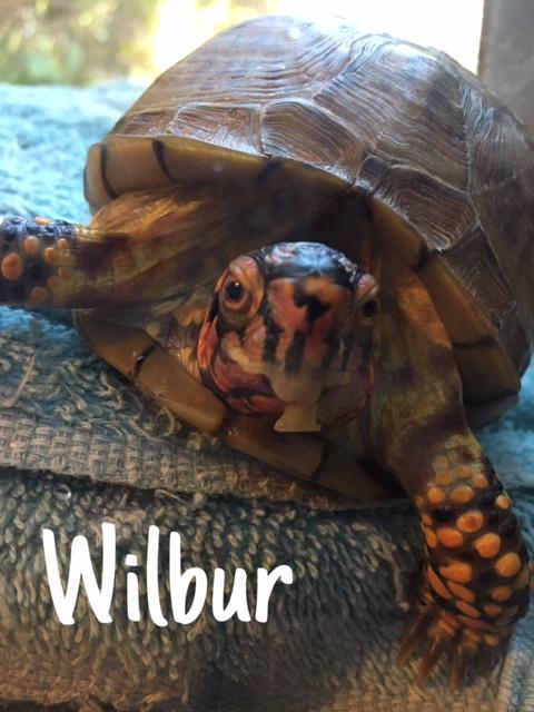 29 Wilbur