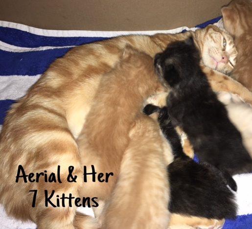 33 Aerial & Kittens