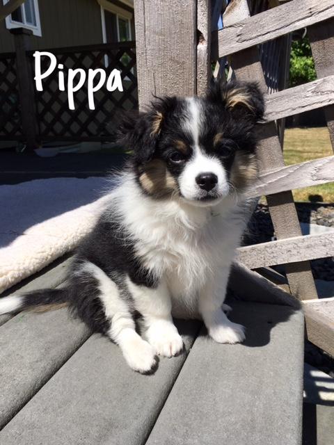 39 Pippa