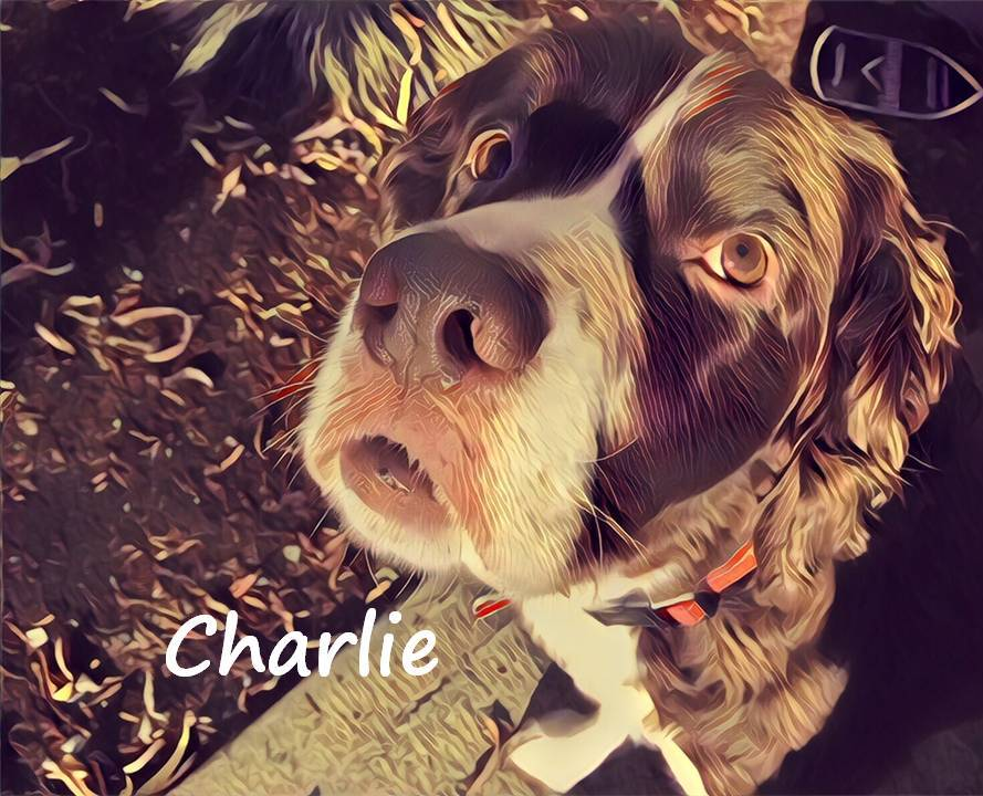 Charlie Thorington