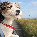 Best ways to keep our pets safe in cars