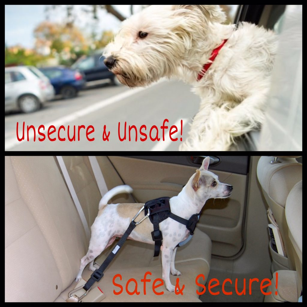 Safely Secure Dogs in Cars while Pet Sitting in Arlington, WA