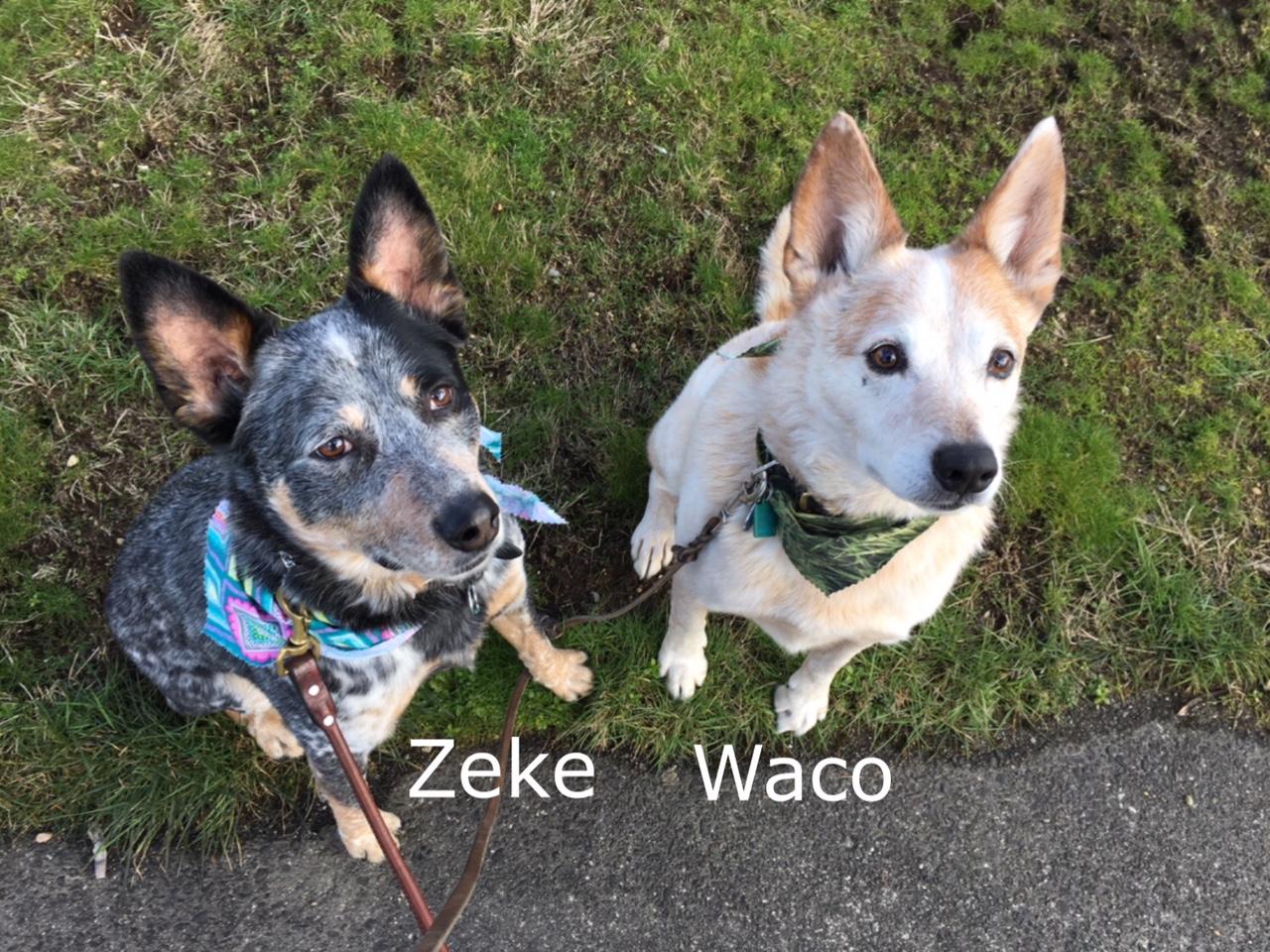 Zeke & Waco