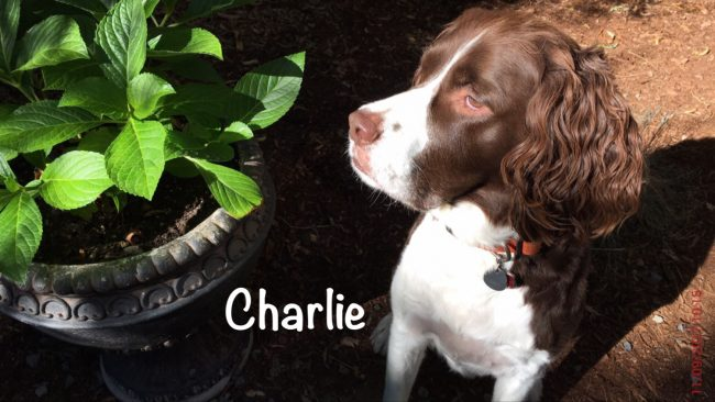 Charlie by plant